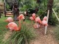 FlamingiSarasotaJungleGardens10