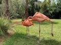 FlamingiSarasotaJungleGardens11
