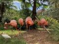 FlamingiSarasotaJungleGardens12