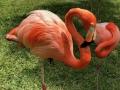 FlamingiSarasotaJungleGardens17