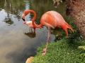 FlamingiSarasotaJungleGardens2