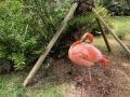 FlamingiSarasotaJungleGardens4