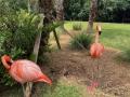 FlamingiSarasotaJungleGardens7