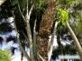 Niezwykłe palmy