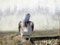 PelikanPrzyRinglingBridge