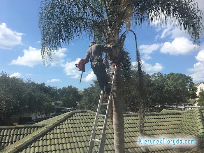 Przycinanie palm