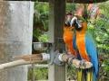 SarasotaJungleGardens3