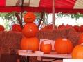 SarasotaPumpkinFestival4