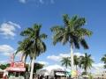 SarasotaPumpkinFestival9
