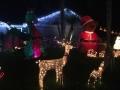 ChristmasLightsPalmHarbor