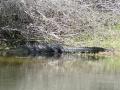 aligatorprzyszkole