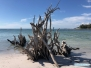 Beer Can Island Beach
