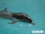 Delfinek Moonshine