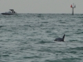 DelfinyNaClearwaterBeach