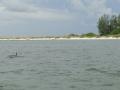 delfinki2