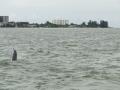 delfinki4