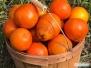 Farma cytrusów w Sarasocie
