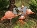 FlamingiSarasotaJungleGardens8