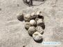 Jaja żółwi morskich