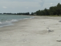 Longboat Key Beach11