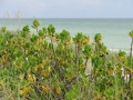 Longboat Key Beach14