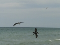 Longboat Key Beach2