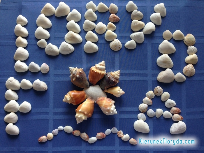 Muszelki z Turtle Beach