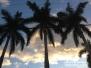 Palmy przed zachodem słońca