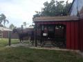 AmishVillage14