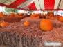 Sarasota Pumpkin Festival