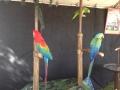 SarasotaPumpkinFestival14