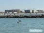 Skaczący delfinek