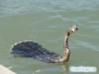 Wężówka z rybką