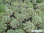 Wieża obserwacyjna w Myakka State Park