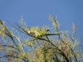 zielonepapugi