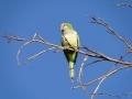 zielonepapugi2