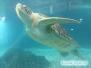 Żółw Harry